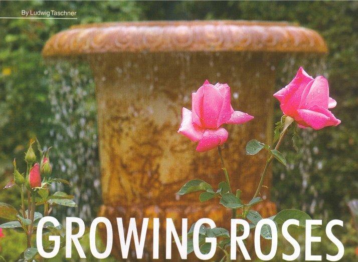 gardener 2005 05 roses 1 Growing roses