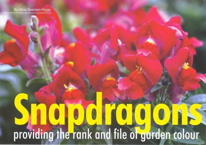 gardener 2005 05 snapdragons 1 Snapdragons