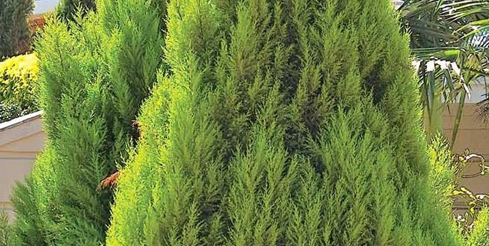 Bushes And Trees For Landscaping