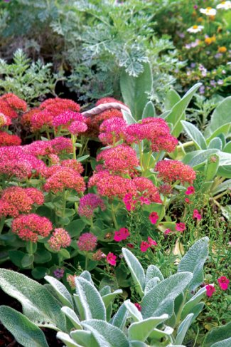gardener 2005 06 waterwise 3 Waterwise