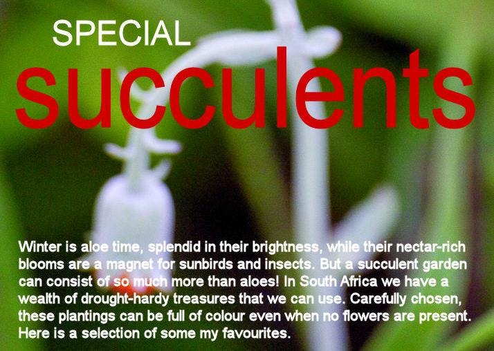 gardener 2005 07 succulents 2 Succulents